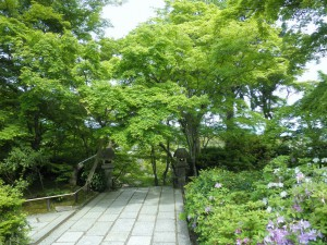 新緑の常寂光寺