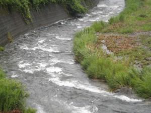 南川の支流の久田川